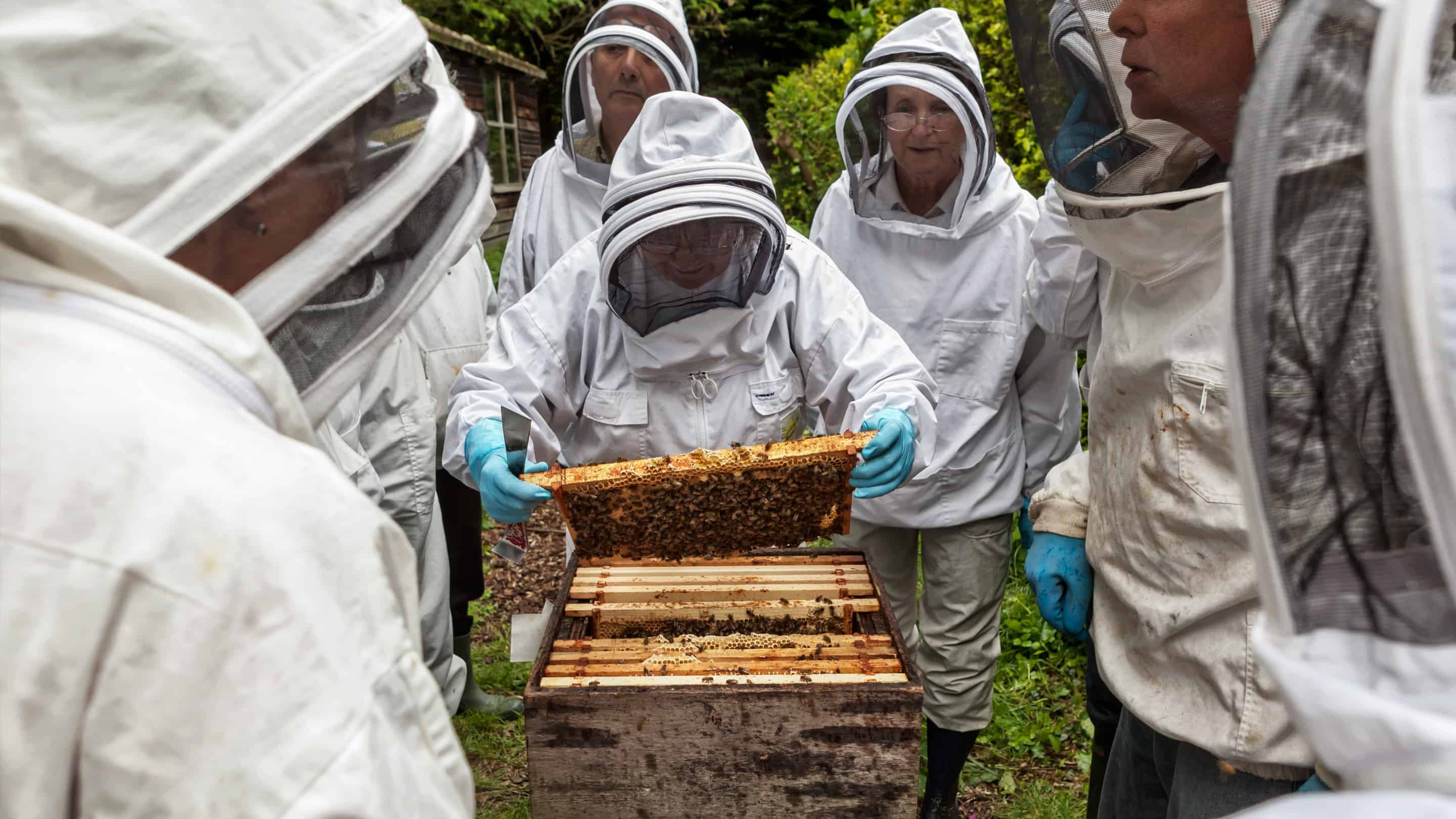 Enfield Beekeepers Healthy Hive Day
