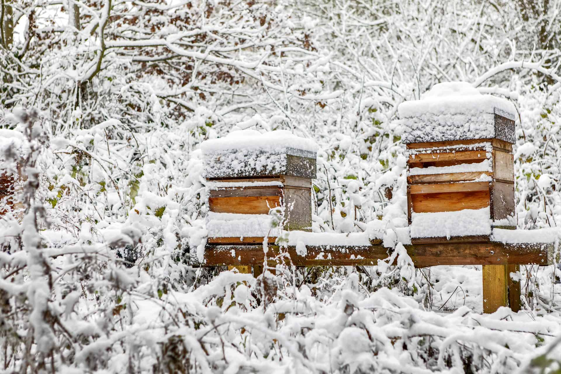 hives-in-snow_2880