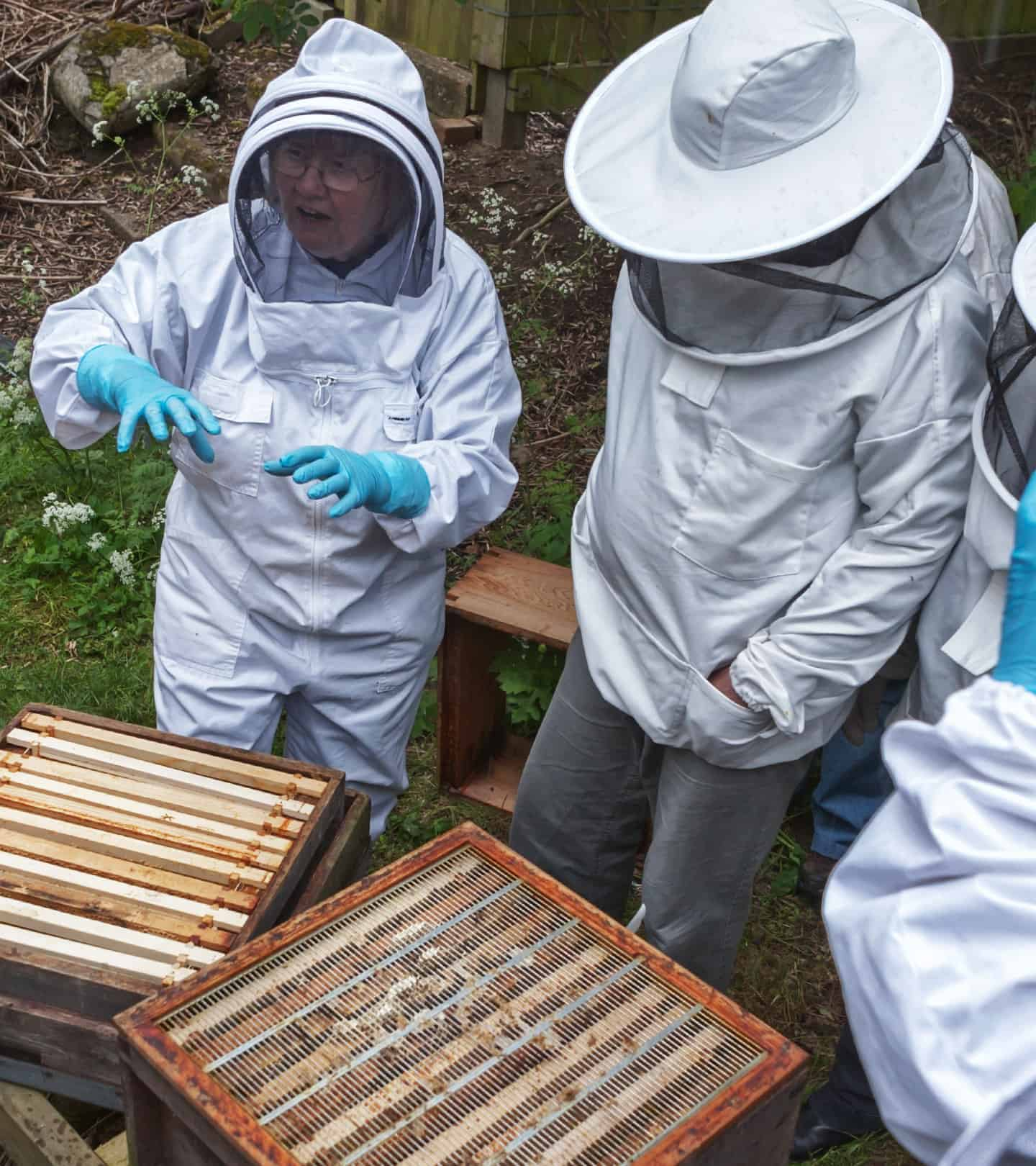image_1440_apiary_education_02